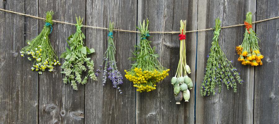 plantes anti-déprime